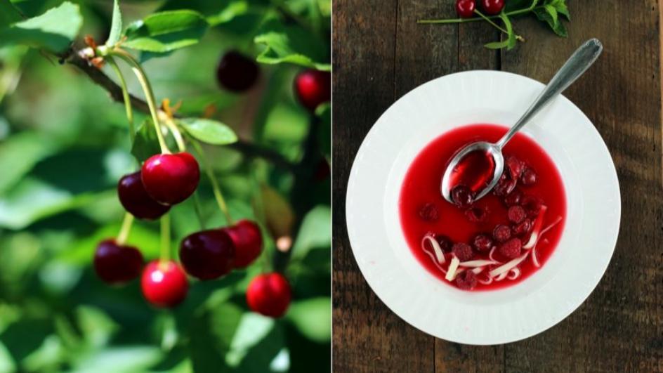 Zupa wiśniowa z makaronem, śmietaną i kawałkami owoców