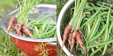 Leczo warzywne z cukinią, młodą marchewką i fasolką szparagową