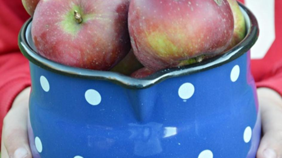 Zupa z jabłek z suszonymi jagodami goji